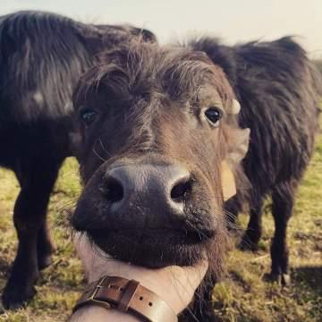 Visite de ferme en famille ou entre amis près de Lectoure dans le Gers
